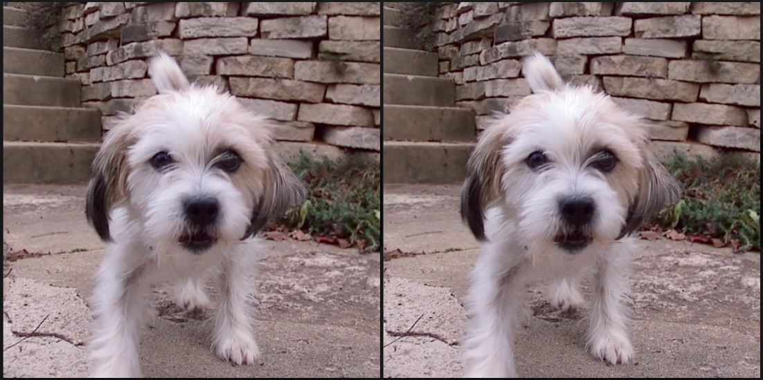 How to Create Stereoscopic Cross-View 3D Pictures from Lytro Images (picture: Jeff Wilson)