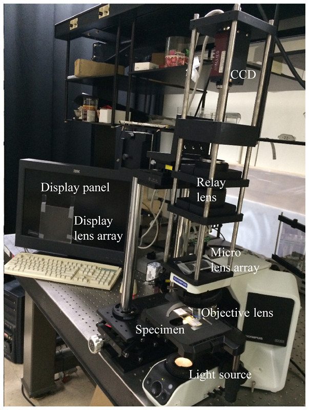 Light Field Microscopy: New Imaging System Allows Real-Time 3D Microscopy (image: Kim et al. 2014)