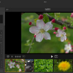 Lytro Desktop 4.3: Direkter Photoshop-Export