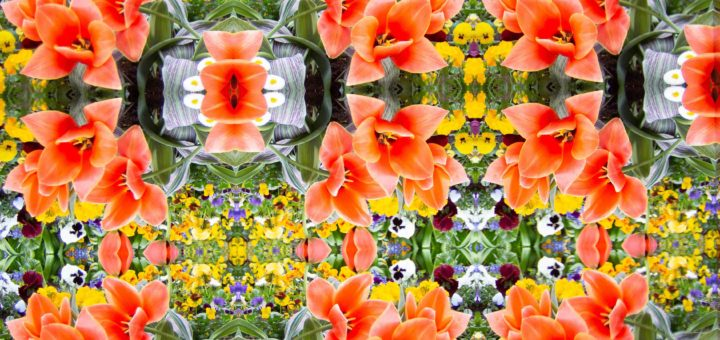 "K|Lens sample photo - Spring flowers, ""raw"" kaleidoscopic view"